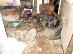 A Recluse Has Been Banned From Keeping Pets For Life After He Neglected Several Dogs & Ducks So Badly That Some Had To Be Put Down