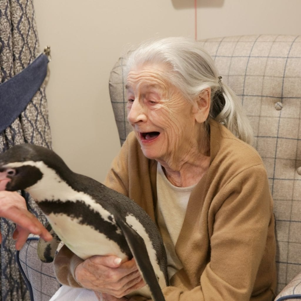 An OAP Who Loves Penguins Was Given A Pppppick-Me-Up By Care Home Staff Who Invited One In To Meet Her