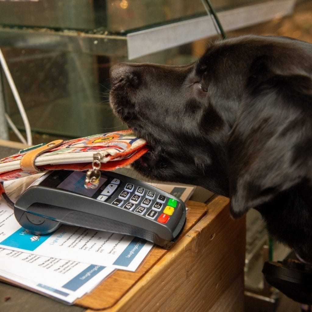 Young Disabled Woman Is Given A New Lease Of Life Thanks To Her Assistance Dog - Who Even Pays For Her Shopping!