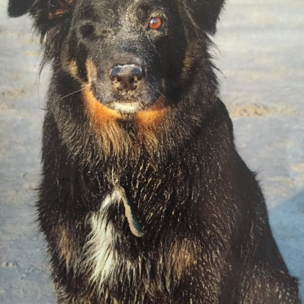 Devastated Couple Are Pleading With Thieves To Return Ashes Of Their Beloved Family Dog