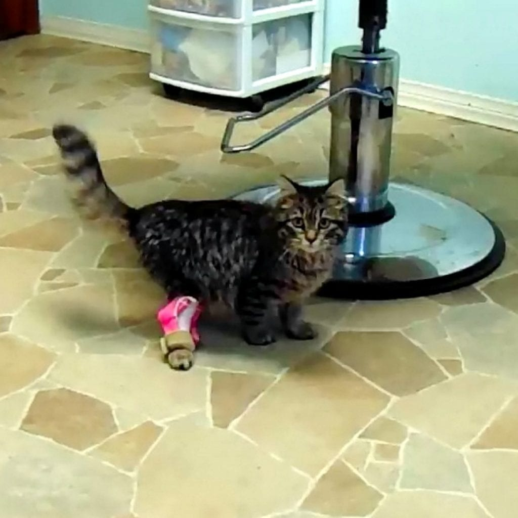 Wobbly Kitten Can Now Walk Straight, Thanks To 3D Printing Technology