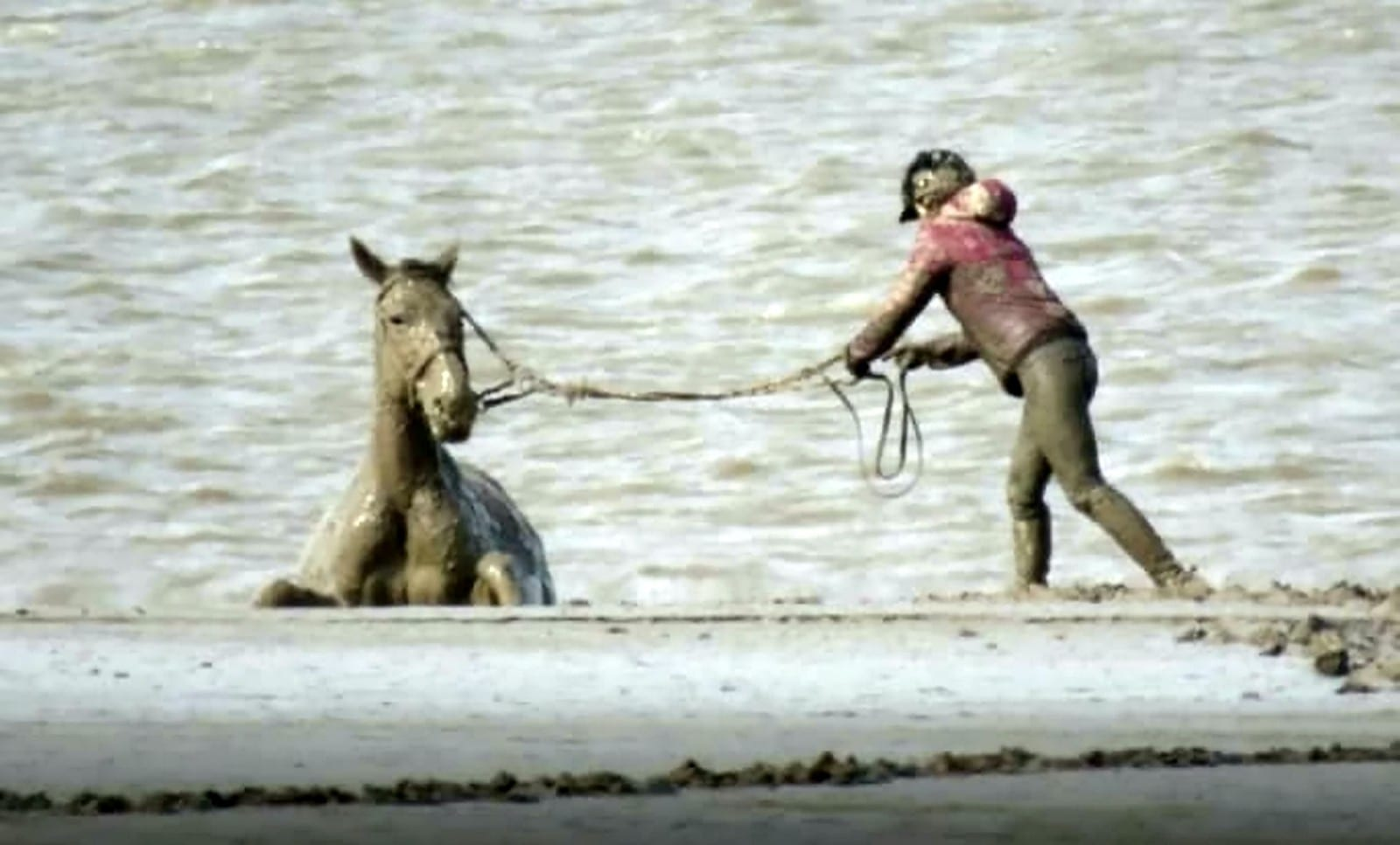 Trapped Horse And Rider Saved From Drowning In Mud By Huge Rescue Operation
