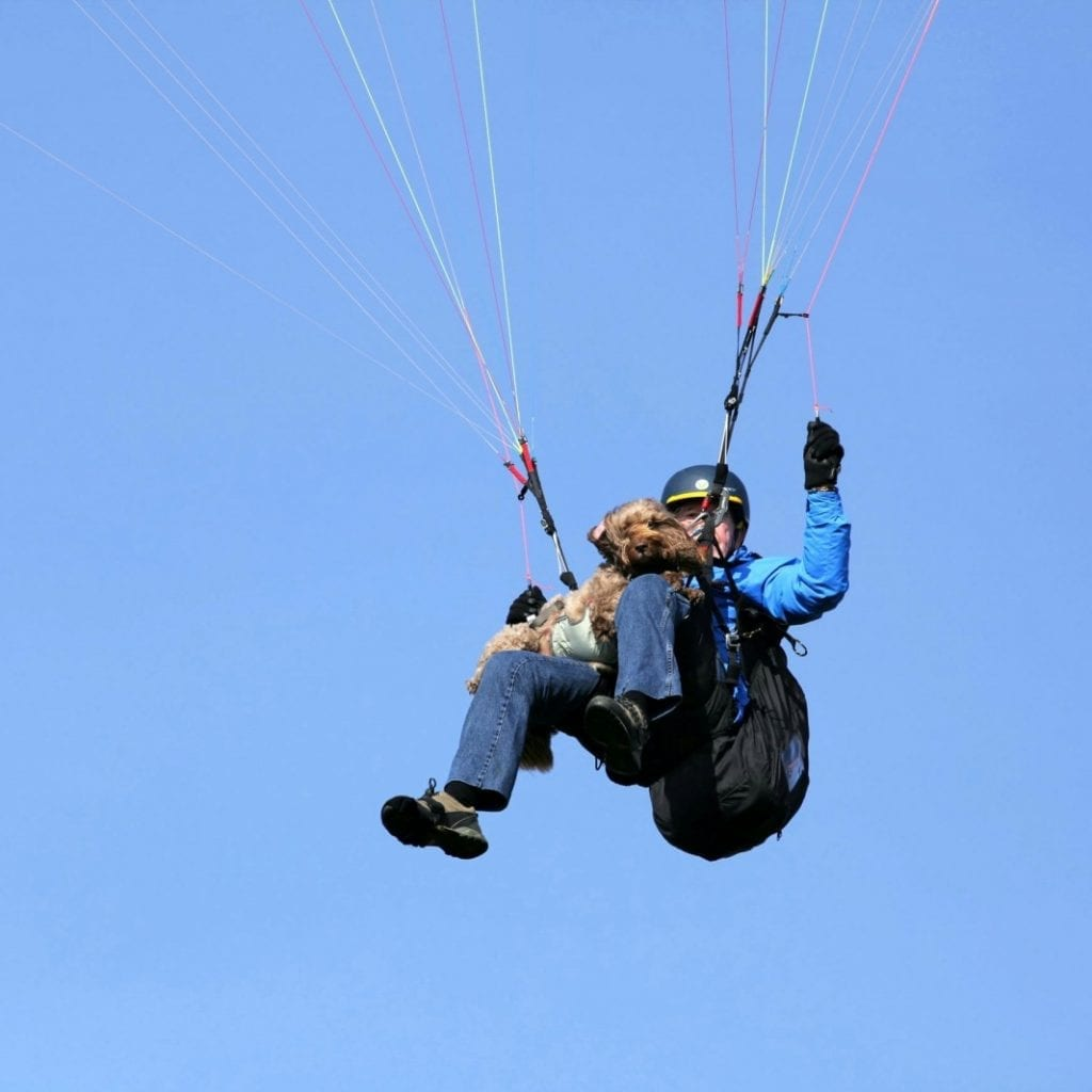 DON'T LOOK DOWN, BOY! - Meet Britain's Paragliding DOG That Takes To The Skies With His Owners