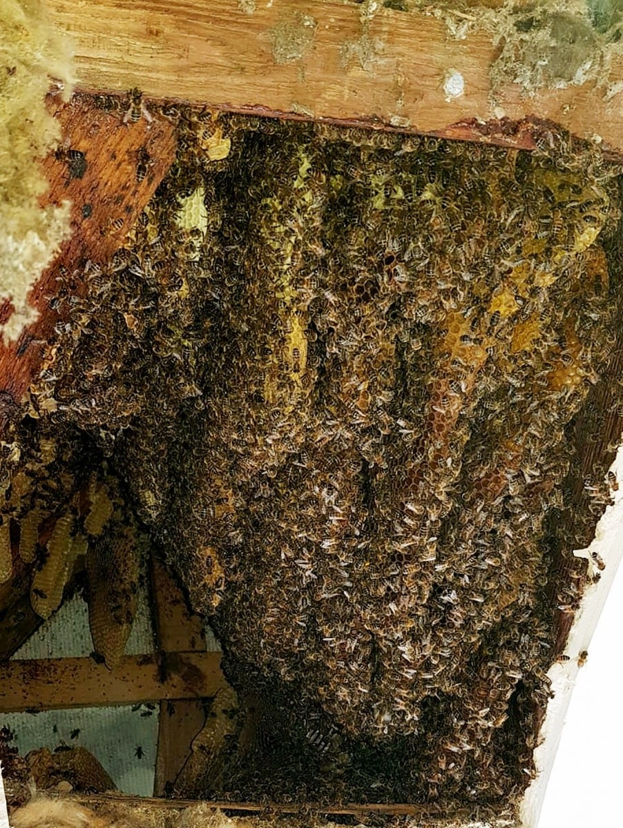 Terrified Family Call In Pest Controllers After Their House Is Taken Over By A Swarm Of 22,000 BEES