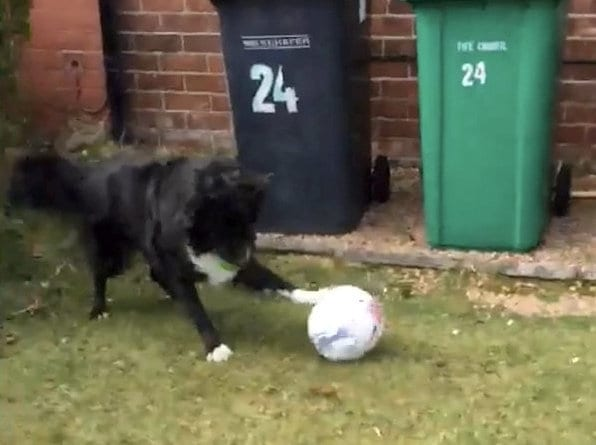 Dog Shows Off Amazing Footie Skills And Refuses To Let Postman Deliver Letters Unless They Have A Kickabout