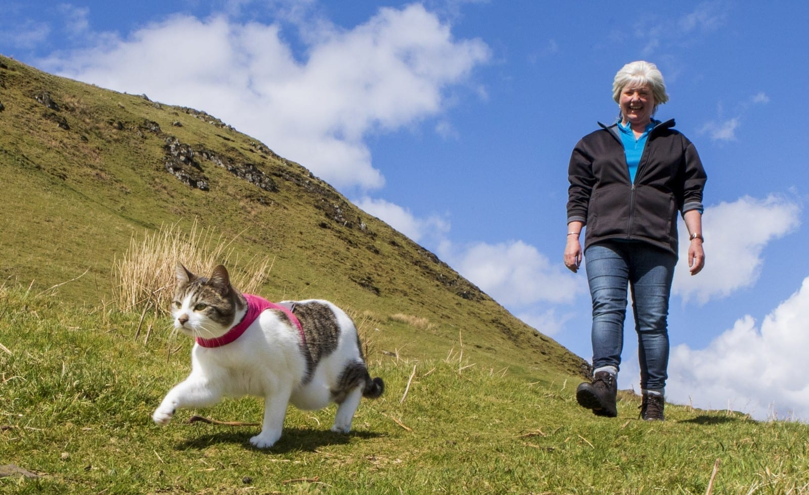 Meet The Adventurous Moggie Which Loves Going HILLWALKING With Her Owner
