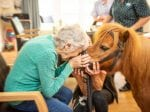 OAPs Overjoyed As Adorable Miniature Ponies Paraded Around Care Home