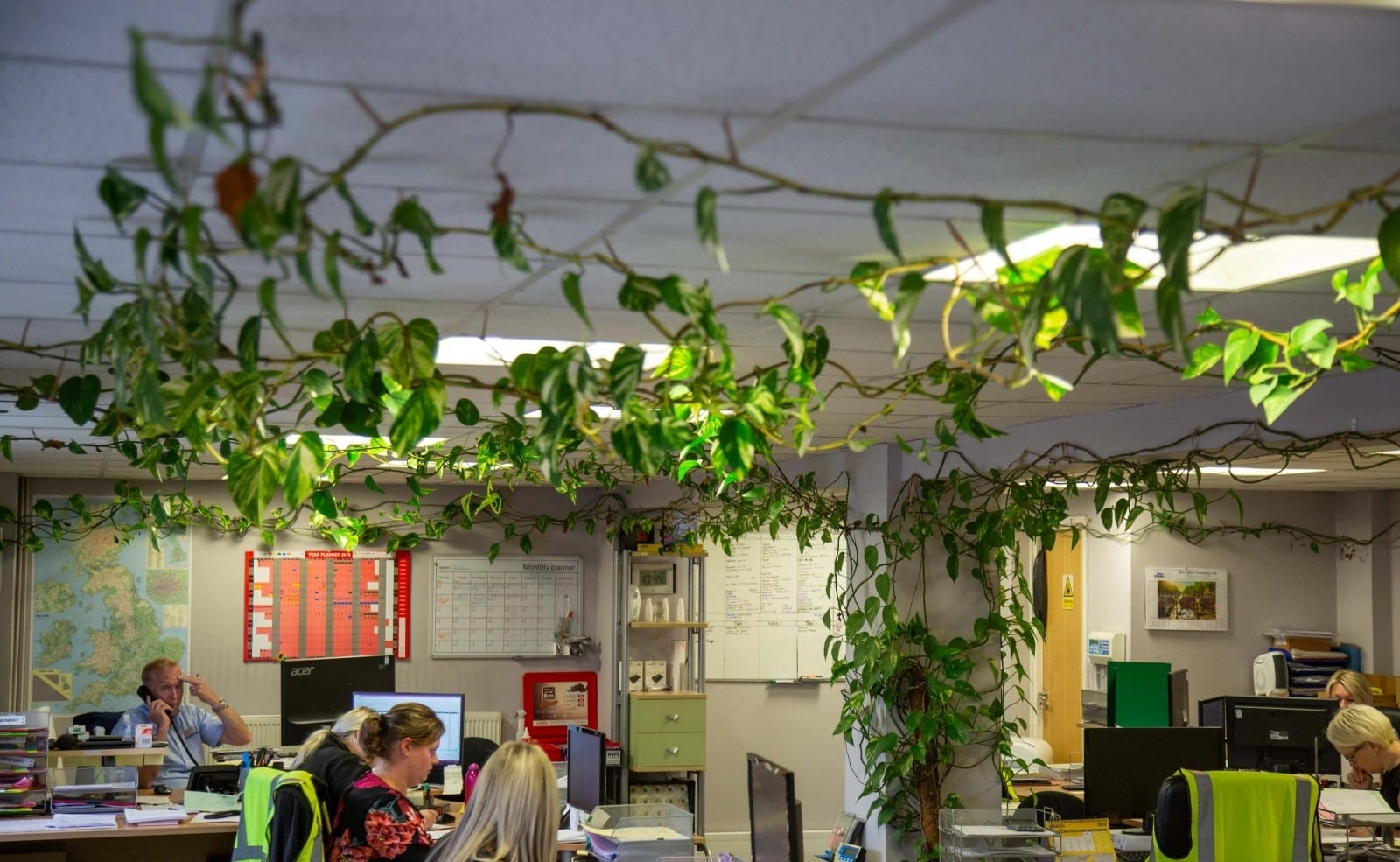 Small Plant Put In An Office Ten Years Ago Has Turned Into 300FT Monster – Filling The Entire Building