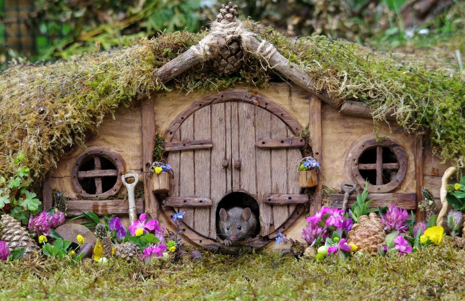 A British Photographer Has Made An Adorable Resort For Wild Mice In His Back Garden