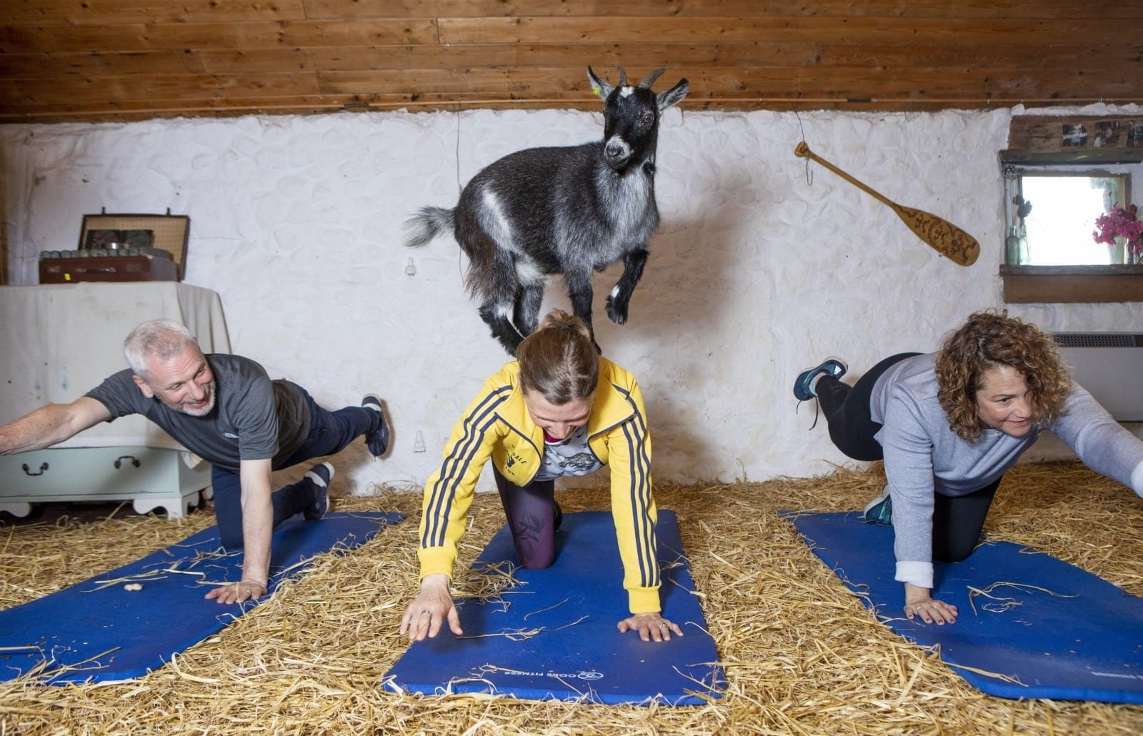 Fitness Class Has Become The First In Scotland To Practice Pilates With GOATS