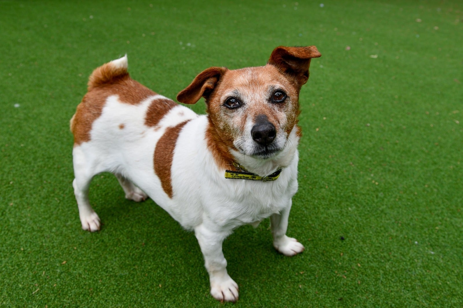 An Appeal Has Been Launched To Find A Home For The Oldest Dog In Care In Britain