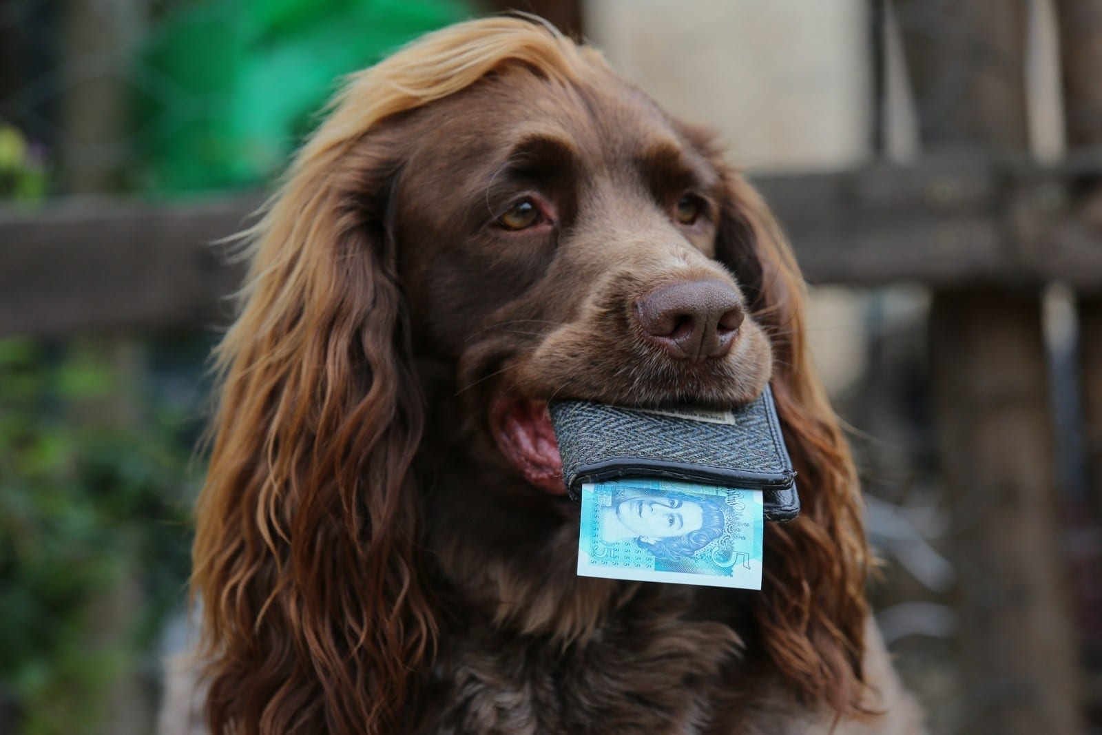 Pampered Dog Gets £5 A Week Pocket Money To Keep In His Own Wallet