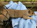 Greedy Squirrel Needed Rescuing After Getting Stuck In A Bird Feeder
