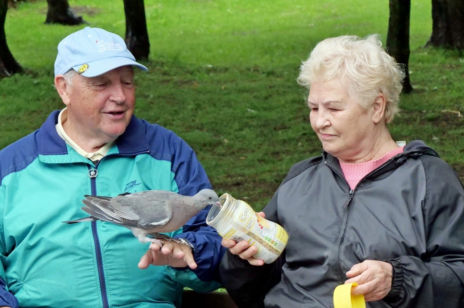 Pigeon Rescued By Kind Retired Couple Now Visits Them Every Day In The Park