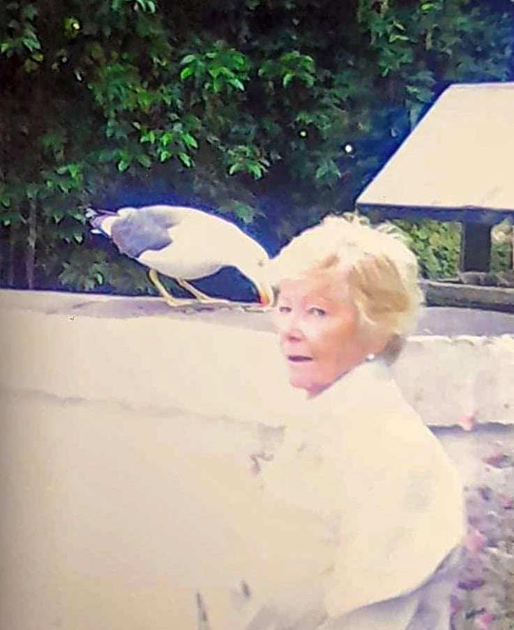 Widow Forms Close Friendship With Seagull Who Visits Her Twice A Day