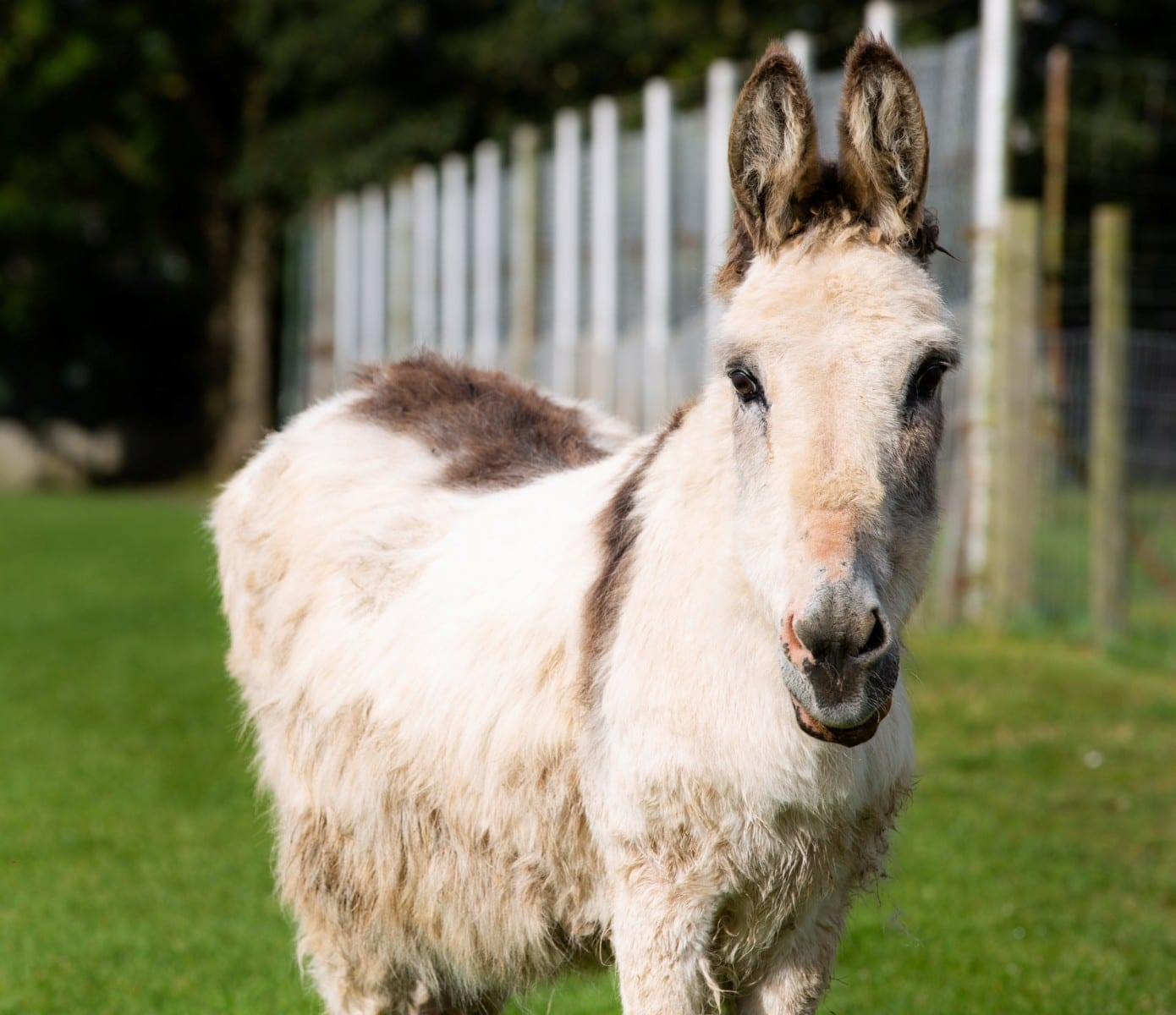 Meet Britain's Oldest DONKEY Who Has Lived TWICE As Long As Expected