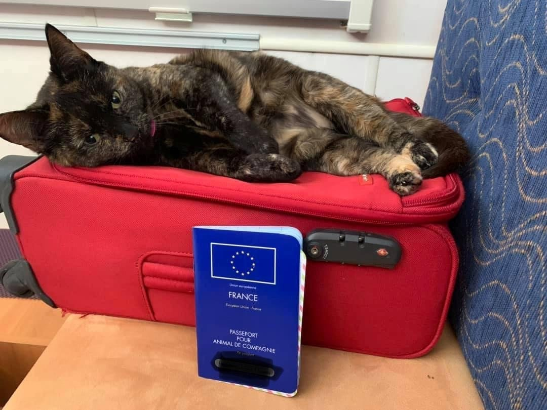 Courageous Cat Enjoyed A 1,500 Mile Road Trip After Stowing Away In Her Owners' Caravan When They Went On Holiday To France