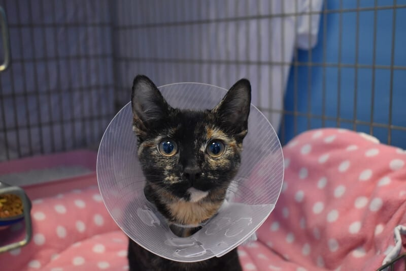 Kitten Abandoned By Her Owners After Falling Out Of A Window