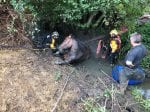 Firefighters Rescue Hapless Horse Weighing A Tonne After It Sank Into A Muddy Ditch