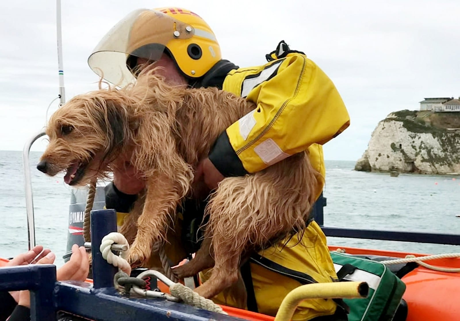 A Brave Dog Needed Rescuing By Coastguards When He Fell 100ft Off A CLIFF