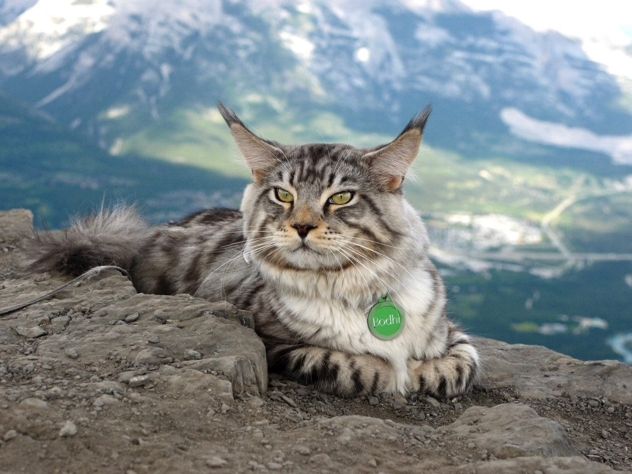 Meet The Curious Cat Who Hikes, Bikes, Paddleboards And Even Goes SKIING With His Devoted Owner