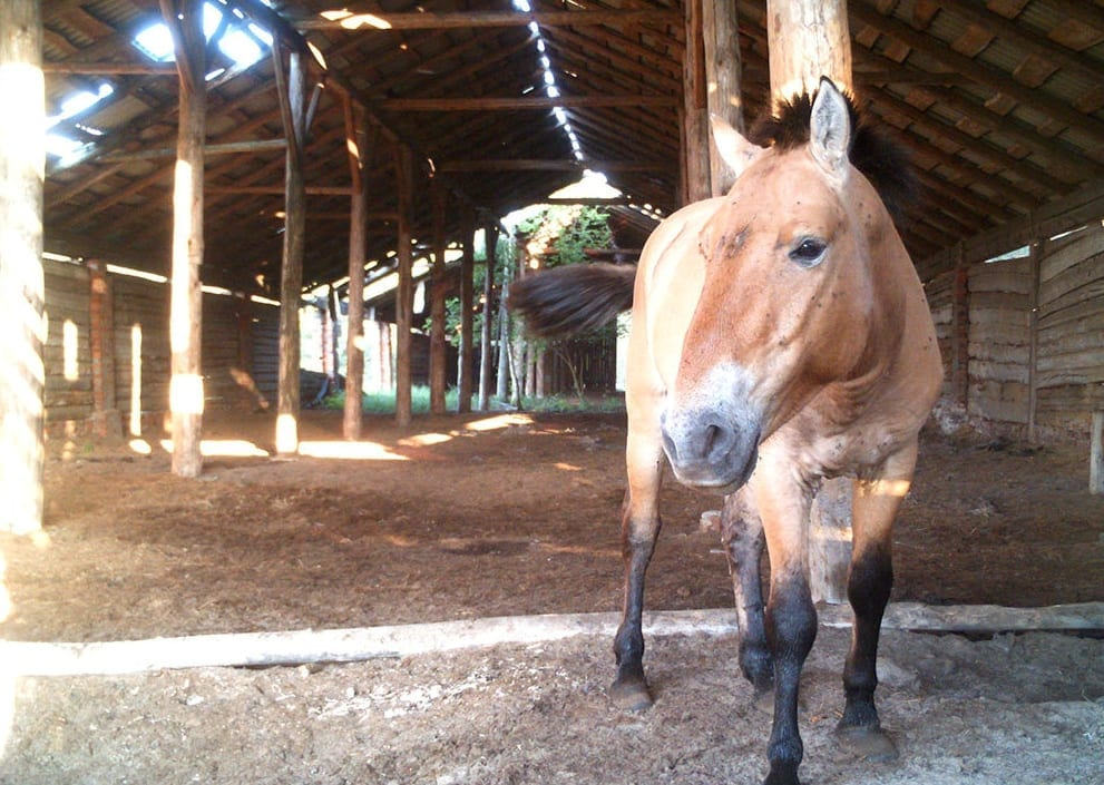 Rare Horses Have Made Their Home In Chernobyl Exclusion Zone That Was Abandoned After The 1986 Nuclear Accident