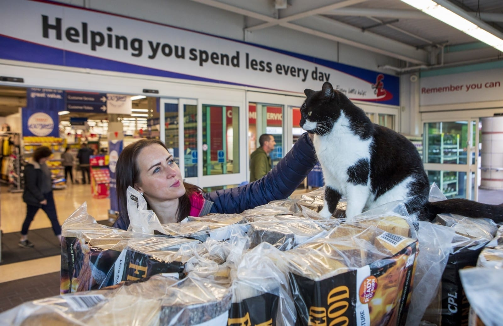 A Fat Cat Has Made A Branch Of TESCO Its New Home - And Even Begs Crisps From Passing Shoppers