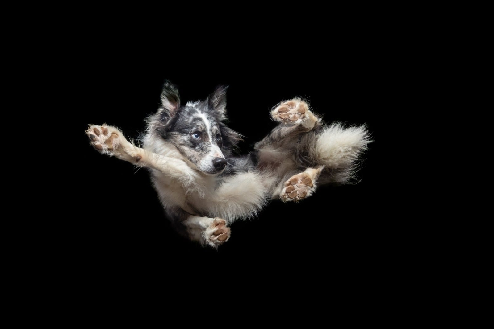 Pet Photographer Captures Series Of Hilarious Images Of Dogs 'Flying Through The Air'