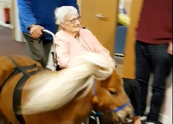 Elderly Care Home Residents Go For A Spin In A Wheelchair – Towed By A Shetland PONY