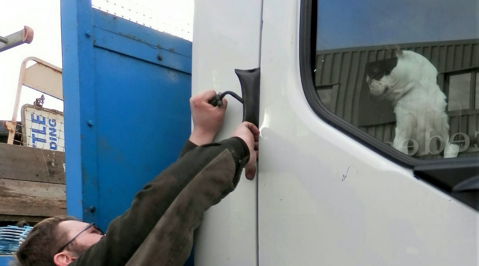 Dogs Locked Lorry Driver Out Of His Cab!