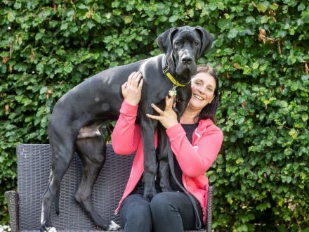 Britain's Biggest PUPPY: Real-life Scrappy-Do Measures Over 6ft And Weighs More Than A Baby HIPPO