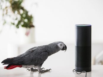 Woman Stunned As Pet Parrot Places Order Using Alexa Voice Recognition