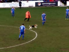Hilarious Footage Shows Dog Pitch Invader Halting Non-League Football Match For Almost Ten Minutes