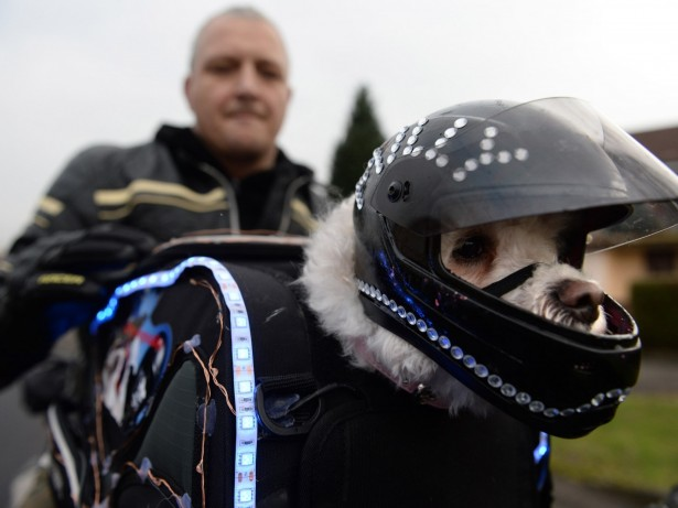 Adorable Rescue Dog Has Become Real Ruff Riding Motorbike Sensation In Leathers And Goggles