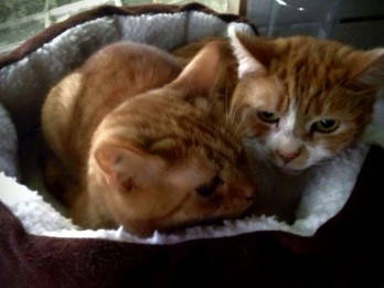 Two Moggies Delivered To New Home 250 MILES Away In Four-Person Cat 'Relay' Made Up Of Four Strangers