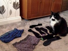 Cat Called Reginald Found To Be The Serial Knicker Thief Pinching Items From Neighbours' Washing Lines