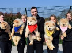 Five Rare Chow Chow Puppies Rescued After Being Smuggled Into The UK