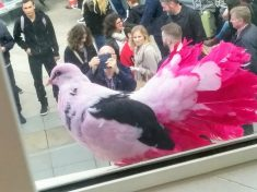 Bright Coloured Pigeons Causing A Flap In Brighton
