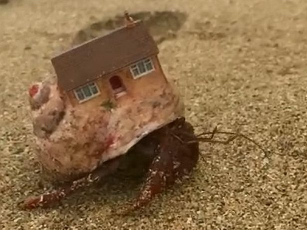 British Holiday Makers Baffled After Finding Hermit Crab Making Itself At Home Inside Actual Miniature House