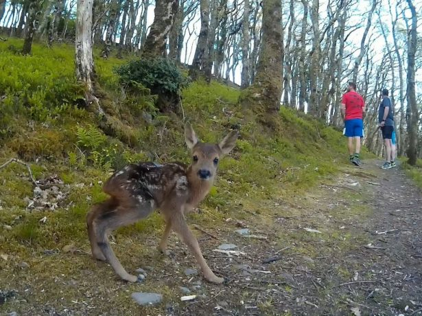 Runners Have Amazing Encounter With Tiny Deer