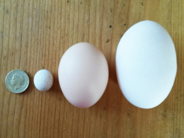 You're yolking! Couple left stunned when hens laid a bizarre assortment of EGGS