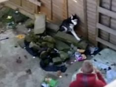 WATCH – Shocking Moment Thug Is Filmed Beating Defenceless Dog Which Yelps Throughout Assault