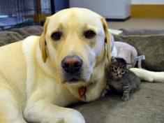 Newborn Kitten Strikes Up Heartwarming Bond With Dog Rescued From Puppy Farm