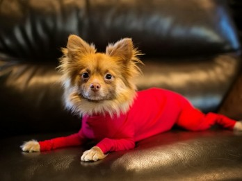 Company makes leotards for dogs to help prevent shedding hair