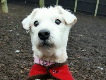 Dying Rescue Dog Back On Her Paws After Being Fitted With Pacemaker