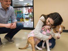 Man Gets Down On One Knee In Animal Shelter And Tells Girlfriend They're Finally Getting A Puppy