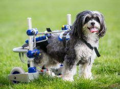 Paralysed Dog Given A New Lease Of Life Thanks To State-Of-The-Art Pedal Cart