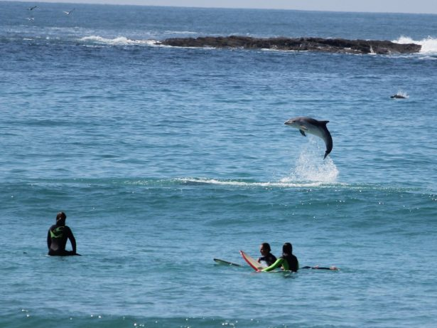 Stunning Pictures Show Dolphins Riding The Waves Alongside Shocked Surfers In Cornwall!