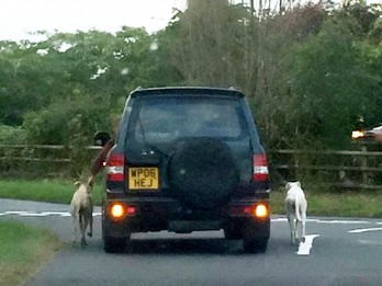 RSPCA condemns driver who drove car walking dogs out of window