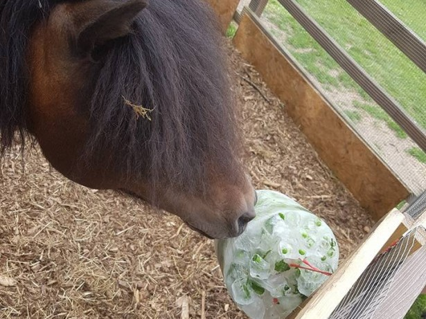 Pony broke into pub, got drunk and coaxed out using bar snacks